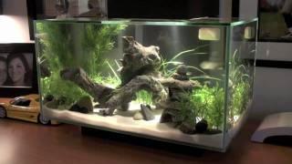 Fluval Edge Fish Tank Hd Youtube