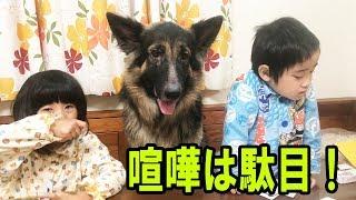 grandchild and #GermanShepherd #dog#シェパード犬 大型犬ジェーマンシ...