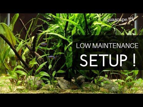 Low Maintenance Nano Aquascape Setup for Beginners