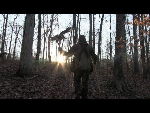 HUNTING WITH A HAWK