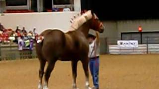 Big Jake, at Midwest Horse Fair ,worlds largest horse of 2010!!!