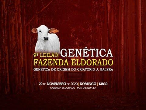 Lote 01   Genética JGalera