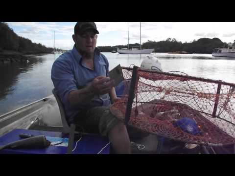 How To Catch Brisbane River Mud Crabs
