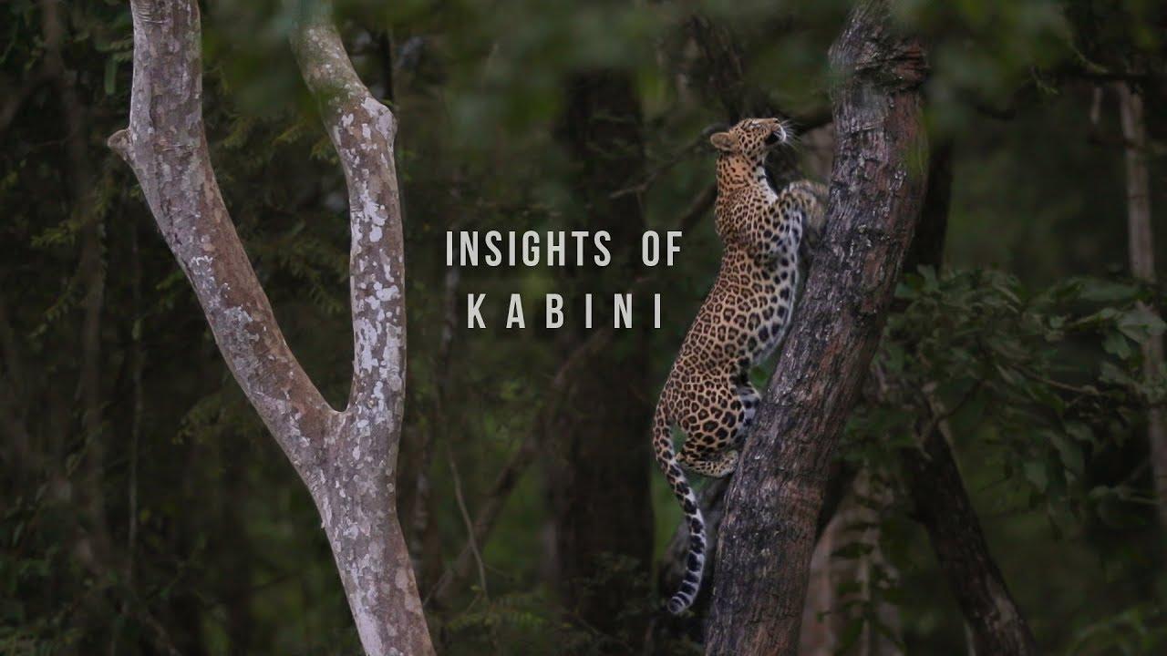 Insights of Kabini | Oct 2018