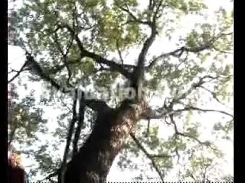 Ponnar Sankar Veeramalai Oli ula