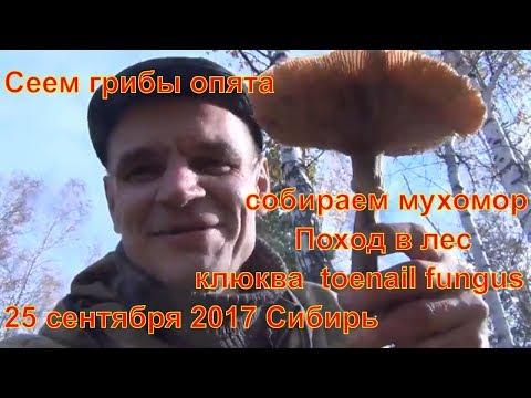 Мицелий белого гриба — Ягоды грибы