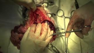 Диафрагмальная грыжа у кошки. Хирургическое лечение
