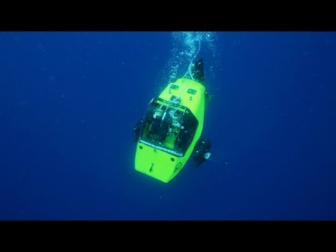 Submersible Finds Sharks in a Kill Zone