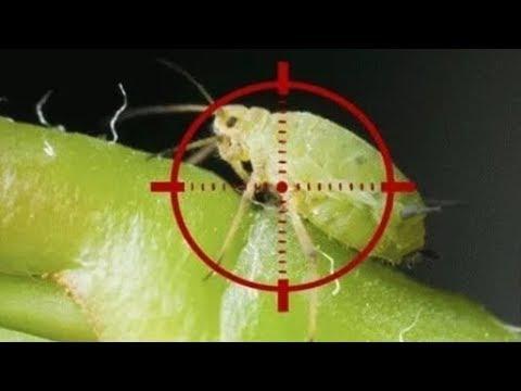 Как БЕЗ ХИМИИ избавиться от вредителей комнатных растений!
