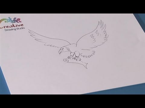 How To Learn To Draw An Eagle Youtube