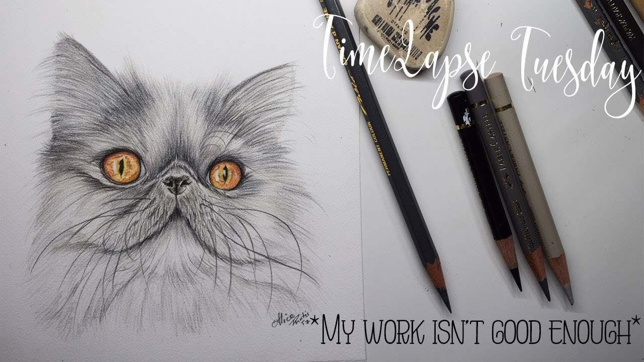 My art isnt good enough persian cat coloured pencil time lapse