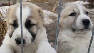 How are puppies asked to eat? VERY CUTE VIDEO