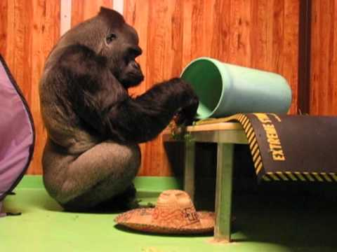 Koko's Friend Ndume's 30th Birthday Experience