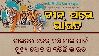Illegal Tiger Trade: India Ranks Second To China In International Trade || Kalinga TV