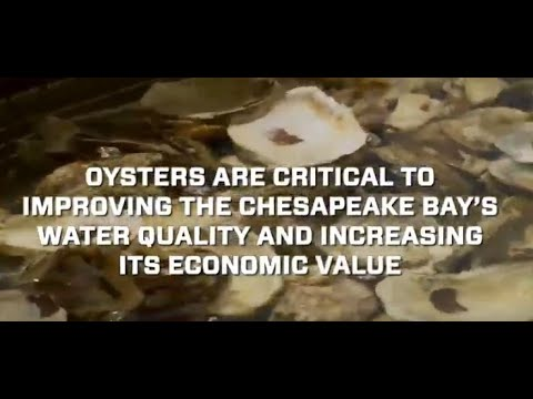 Putting Technology to Work to Save the Chesapeake Bay