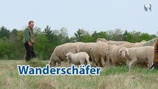 Wanderschäfer Hermann Stadler - Einsatz für den Erhalt der Schöpfung