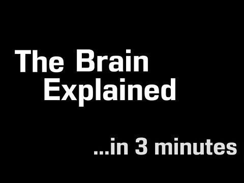 How Your Brain Works In 3 Minutes