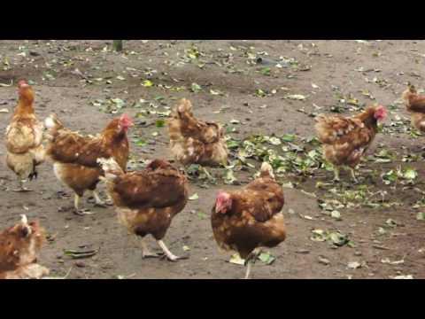 Landmads Økologi: Bøgebæk Økologi (æg)