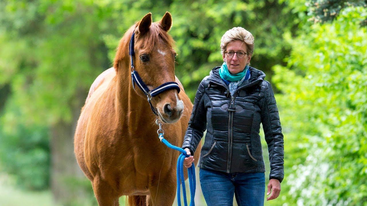 Alte Helden Erfolgspferd Bonaparte Fn