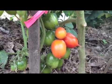 Washington Organic Garden - Full Tour