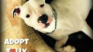 Adopt Tully! Long Island, Ny. Contact Inforoadtohome@gmail.com