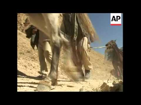 Donkeys Deliver Ballot Boxes In Parts Of Country