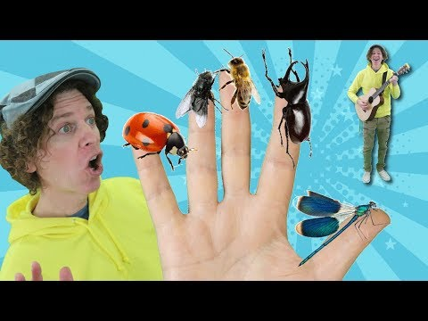 Family Finger Song - Bugs Part 2 with Matt | Nursery Rhymes, Children's Song | Learn English Kids