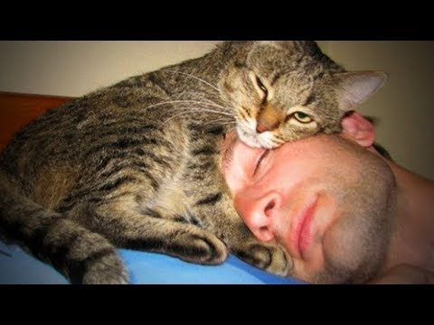 Cute Cats 😻😊 Sweet Loving Cats (Full) [Funny Pets]
