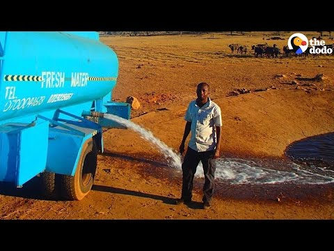 Man Drives Hours to Give Animals Water During A Drought | The Dodo