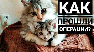 Стерилизация двух бездомных кошек, которые не нужны были хозяевам