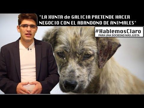 """La Xunta de Galicia (PP) pretende: """"Hacer negocio con el ABANDONO de animales"""""""