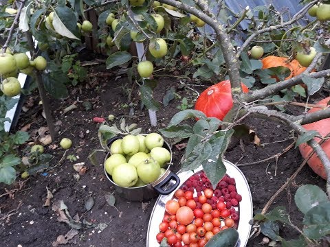Garden Harvest Fall Season Fruits In The Backyard Garden