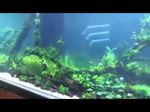 acuario de agua dulce mas grande del mundo