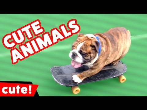 Funniest Cute Pet & Animal Clips, Bloopers & Outtakes 2016 Weekly Compilation | Kyoot Animals