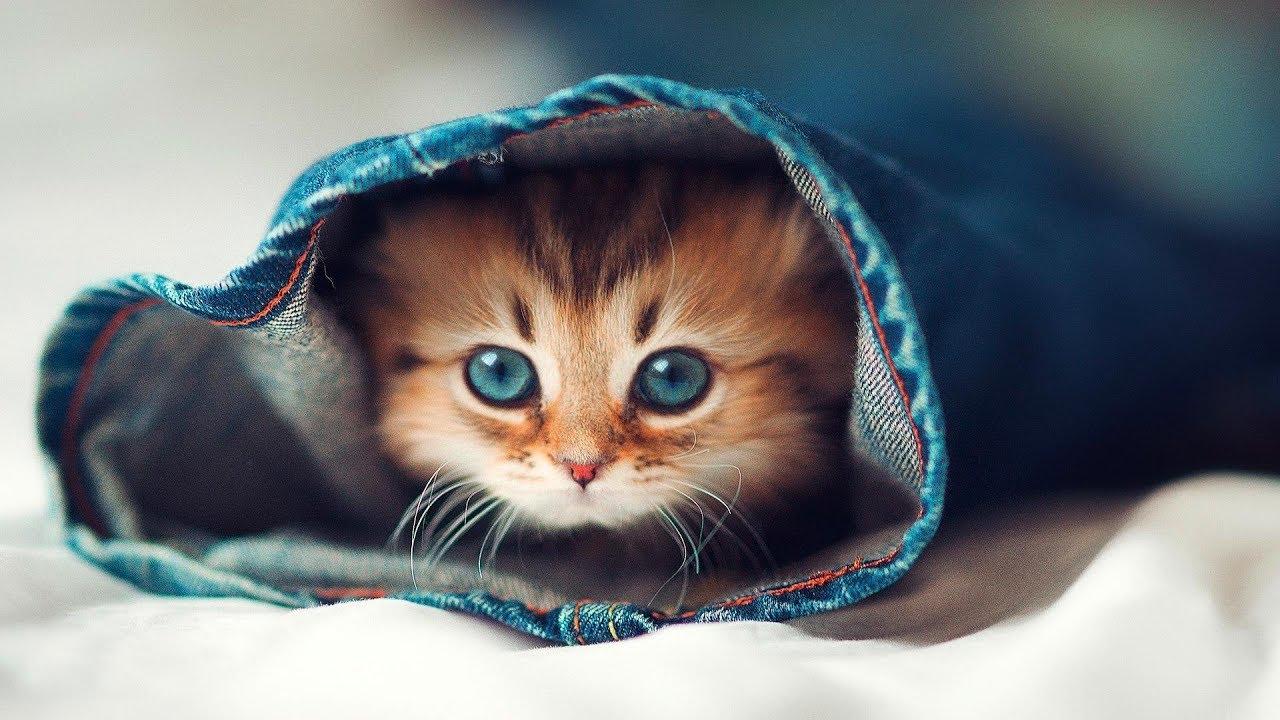 10 Cele Mai Dragute Rase De Pisici