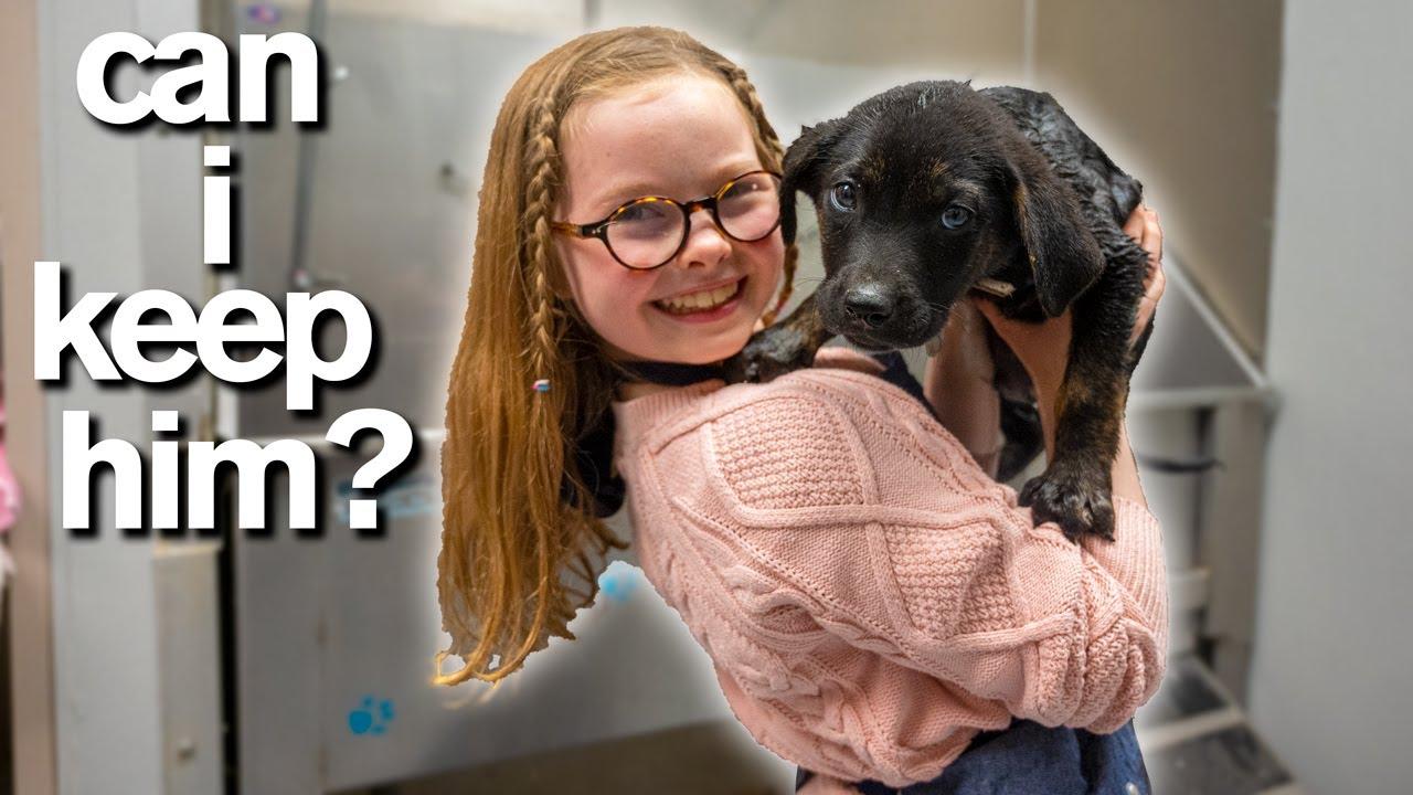 Adopt A Puppy Emotional