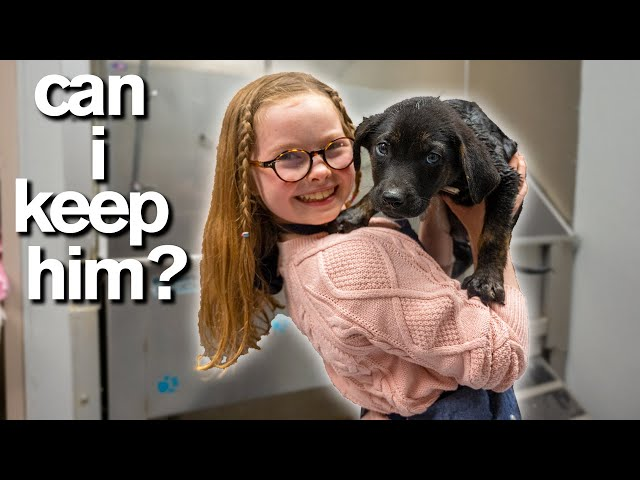 10-Year-Old Has Only 10 Minutes to ADOPT A PUPPY *Emotional*