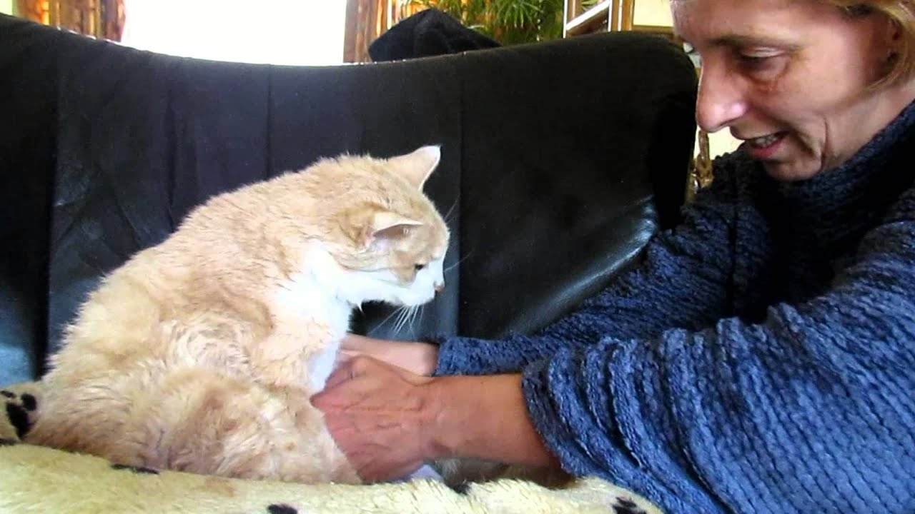 Giving My 18 Year Old Cat Garfield Elderly Care So He