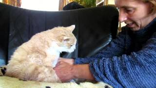 """Giving my 18 year old cat Garfield """"elderly care"""", so he doesn't become a """"Smelly Cat"""""""