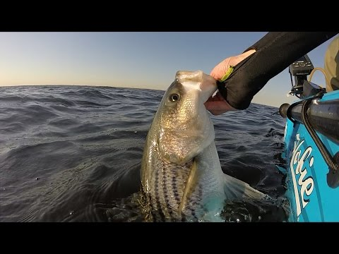 Breaking In The New Boat!! Spring Striper Fishing