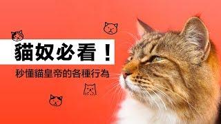 貓奴必看!秒懂貓皇帝的各種行為|科學大爆炸EP.63 thumbnail