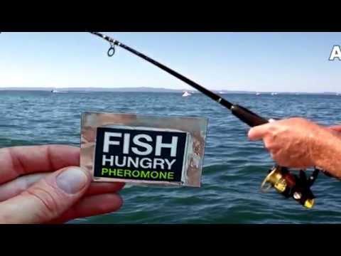 Активатор клева fishhungry отзывы покупателей