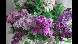 """Картина маслом поэтапно """"Букет сирени"""".Часть I.Bouquet of lilac.Picture"""
