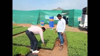 vedant hitech NURSERY_Best plant in Maharashtra