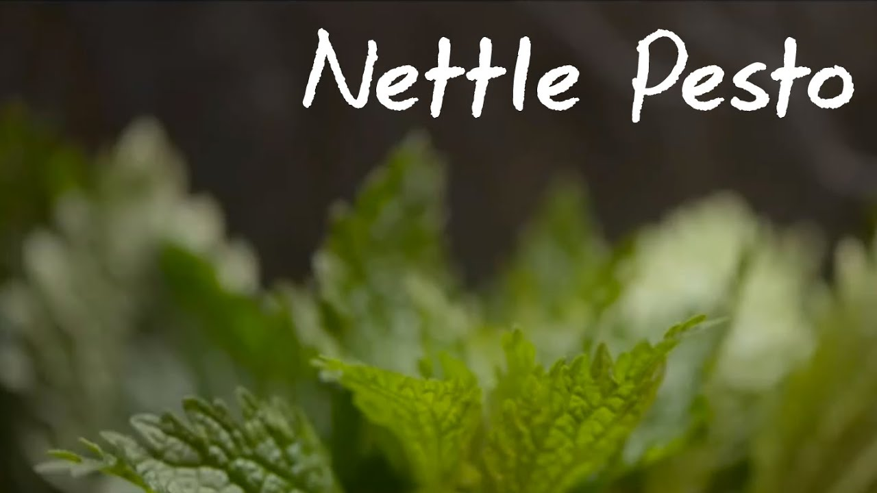 ... pesto mac kale pesto nettles pesto recipes dishmaps nettle pesto the
