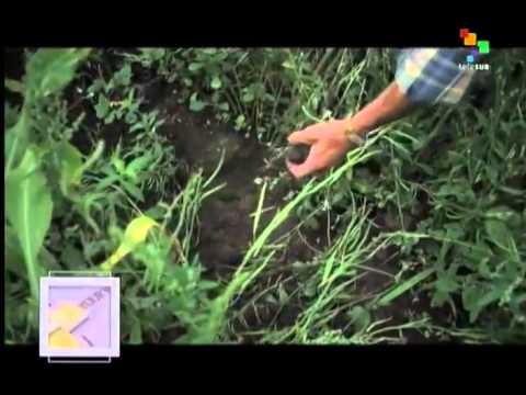 Know Your Body – Agrotoxic Agents vs Organic Farming