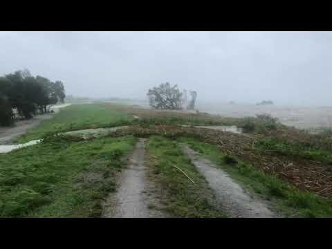 LEVEE OVERTOP with HOGS fleeing flood waters!