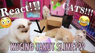 CATS DONT LIKE SLIME ! 5 REAKSI KUCING TERHADAP MAINAN ASING - MANA YANG PALING MEREKA SUKA ?