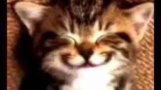 Kucing menyanyi lagu HAPPY BIRTHDAY
