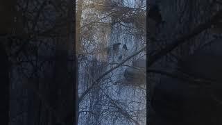 Стая бродячих собак в Смоленске